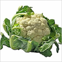 cauliflower_kohl_cheese_cabbage_237802