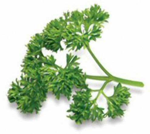 parsley-leaves