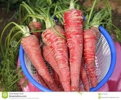 Red Carrots2