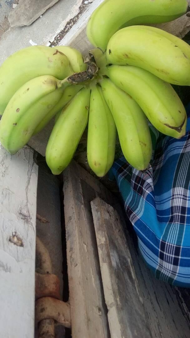 Banana Rasathali 1
