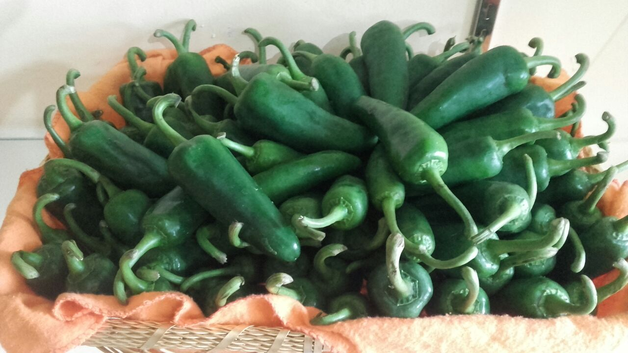 Capsicum Green Long