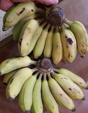 Banana_Alpan