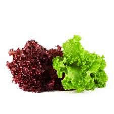 Green&Red lettuce